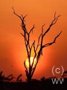 samburu02