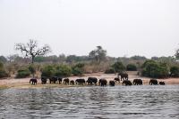 012Chobe NP Elefanten