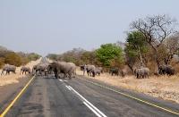 014Chobe NP Elefanten