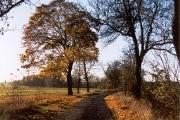 Gröben Herbst